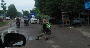 Akses Jalan Tak Kungjung Diperbaiki,  Warga Mapilli Tanam Pisang